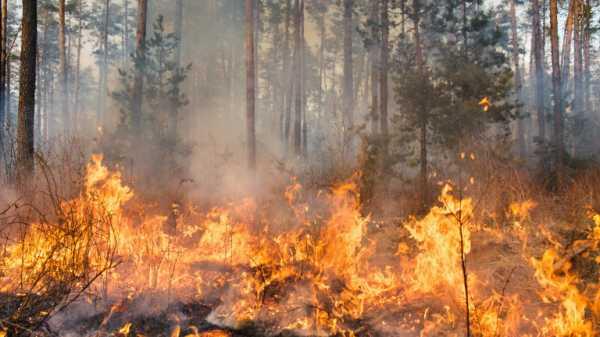 Лесные пожары бушуют в горах Болгарии