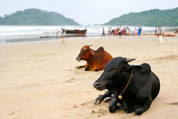 В Гоа кризис, туристы едут в Кералу