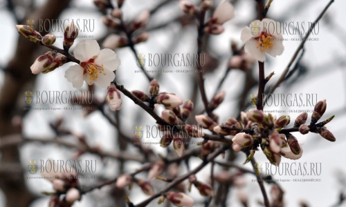 В Болгарии наступила астрономическая весна