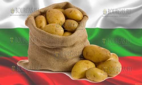В Болгарии выросли цены на картофель