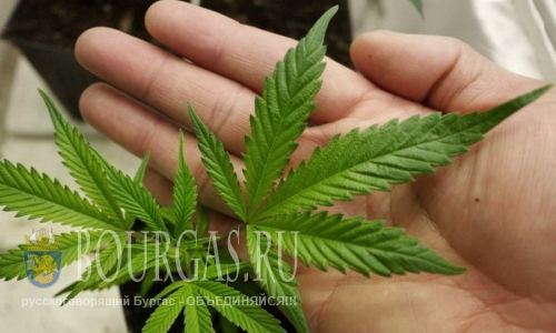 1500 килограммов марихуаны изъято на пограничном переходе «Калотина»