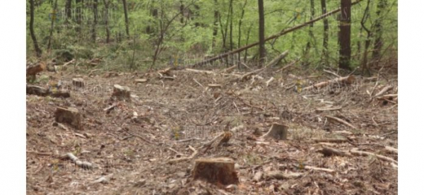 Браконьеры побили лесника в Варненской области