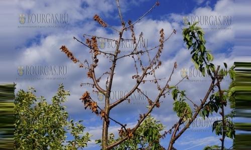Сады в Болгарии серьезно пострадали от заморозков