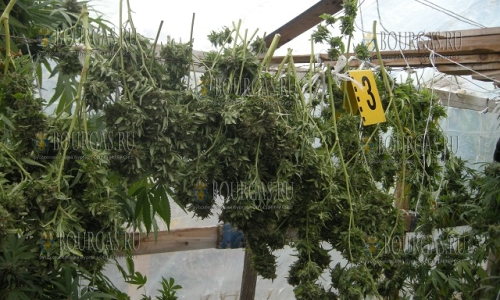 В Варне обнаружили наркооранжерию