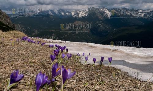 28 мая в Болгарии отмечают День парков