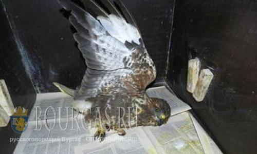 Браконьеры в Бургасе охотятся на редкие виды птиц