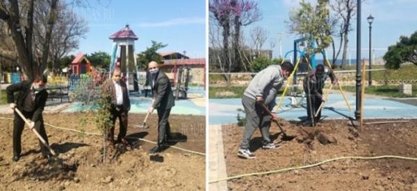 В Созополе сажают деревья