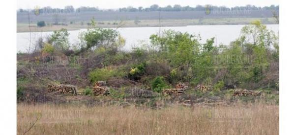 В Болгарии, в районе Дуранкулак, кто-то разрушил гнезда бакланов