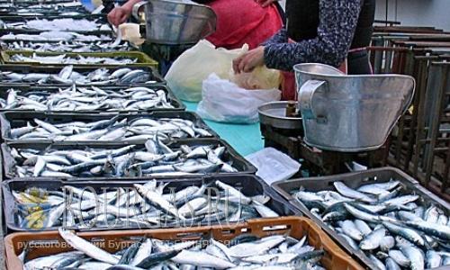 В Южном Причерноморье в Болгарии пошла рыба