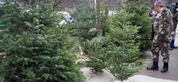 В Болгарии продадут 10 000 елок с целью поддержки пар с репродуктивными проблемами