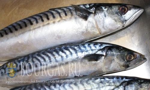 Рыбаки Болгарии в ожидании черноморской скумбрии
