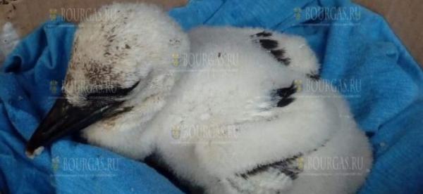 Пловдивские экоинспекторы спасли птенца аиста