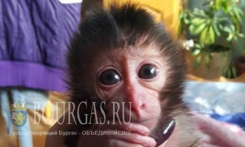 В зоопарке Софии выкормили детеныша обезьяны