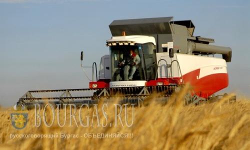 Сбор урожая зерновых в Болгарии начался с опозданием на 2-3 недели