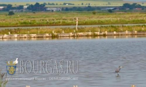 На Атанасовском озере в Бургасе появился редкий вид цапель