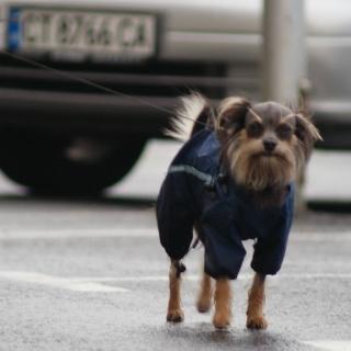 Собаки в Болгарии теперь должны быть чипированы