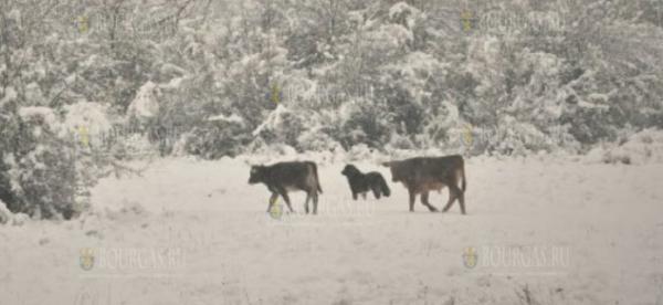 Парк Странджа в Болгарии засыпало снегом
