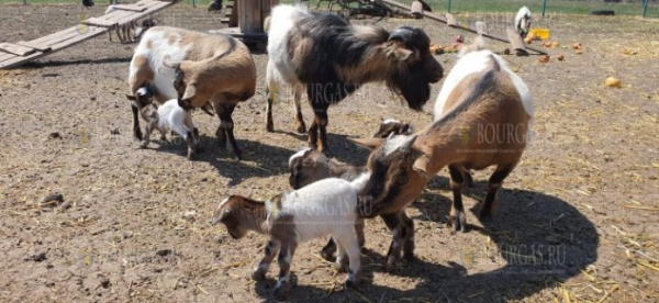 Бэби-бум в зоопарке Бургаса продолжается