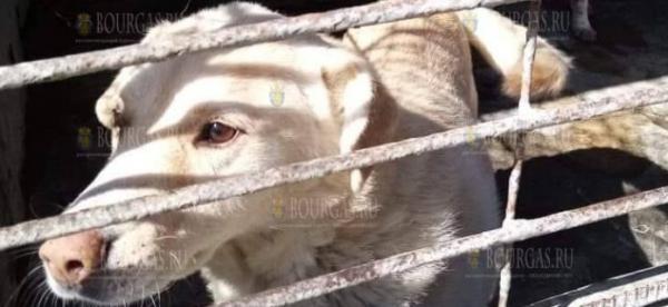 Собачий приют в Бургасе переполнен