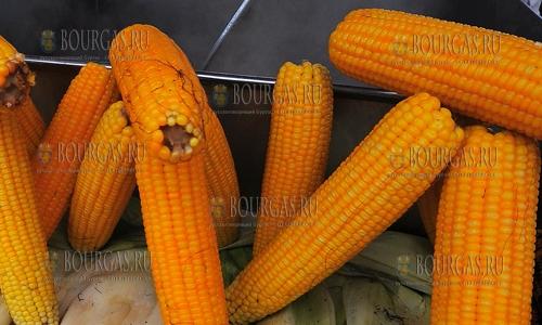 Вареная кукуруза в Болгарии опасна для здоровья