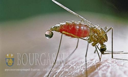 В Болгарии в 2016 году заболели малярией 9 человек