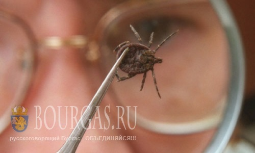 В Бургасе планируют бороться с клещами