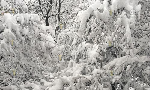 Высота снежного покрова в Риле местами превышает 265 сантиметров