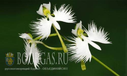 В Варне создано общество любителей орхидей
