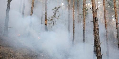 Горят леса в Рильских горах…