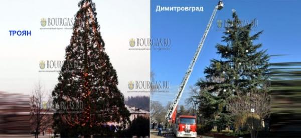 Болгарский город Димитровград смог обойти Троян в заочном споре — у кого выше новогодняя ель