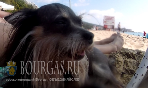 В Софии проверяют, как владельцы собак выгуливают своих питомцев
