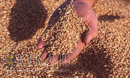 Урожай пшеницы в этом году в Болгарии будет хуже, чем был год назад