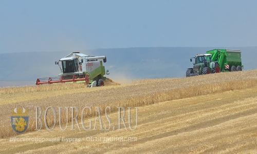 Болгария собрала рекордный урожай зерновых с 1980 года