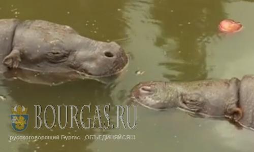В зоопарке в Софии необычное пополнение