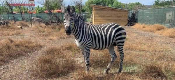 В зоопарке Бургаса появился еще одно животное