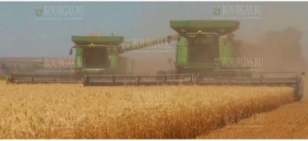В Бургасе убрали зерновые