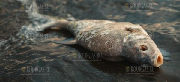 Тонны мертвой рыбы обнаружены в реке Златарице