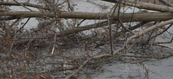 Буря повалила дерево на оживленной улице в Благоевграде