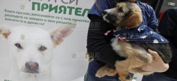 22 собаки перебрались из Болгарии в Германию