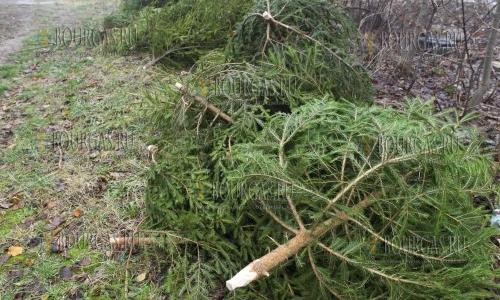 Почти 17 000 рождественских елок уже продано в Болгарии