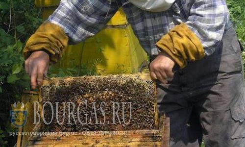 Пчеловоды в Болгарии получат кредиты