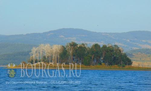 Короеды уничтожающие сосновые леса в болгарских Родопах