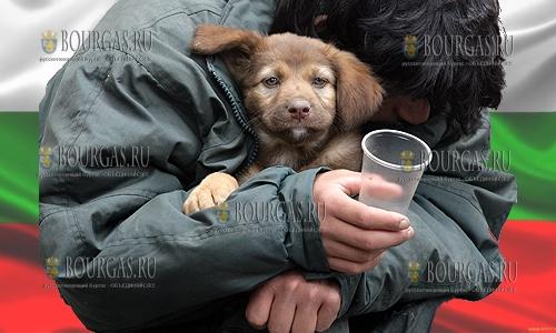 В 2018 году из приютов в семьи забрали 3 872 собак