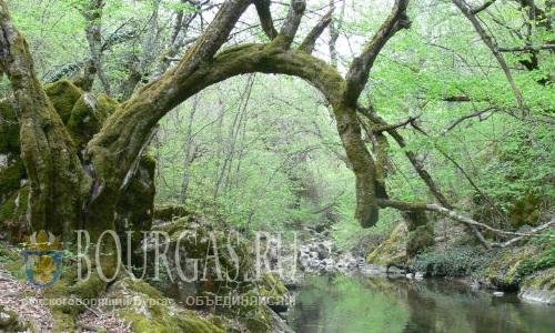 30 лет назад в Болгарии появился один из самых красивых заповедников в Странджа