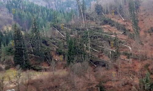 Ураганные порывы ветра в Болгарии, в некоторых регионах объявлено бедственное положение