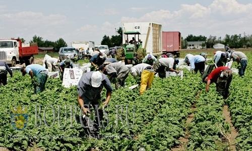 В Болгарии стартует перепись фермерских хозяйств