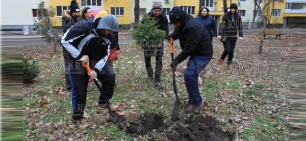 В Бургасе появится Рождественский бор?