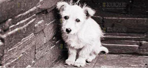 В Софии неизвестные похищают собак?