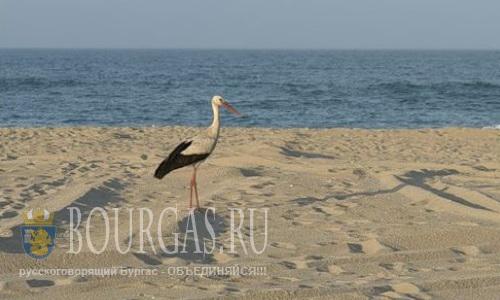 И в этом курортном сезоне — много пляжей на взморье останутся без хозяев…