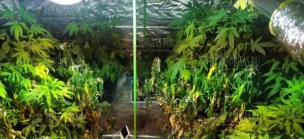 На Солнечном Берегу сотрудники полиции раскрыли теплицы по выращиванию конопли